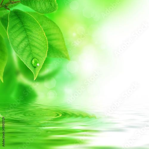 zielone-liscie-z-kropelka-wody