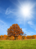 autumn landscape with yellow tree
