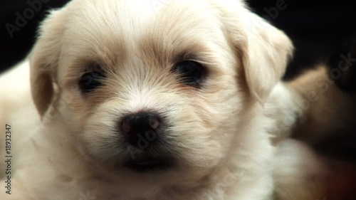 Cute Fluffy Puppy 1