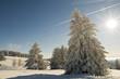 Winterbäume_24