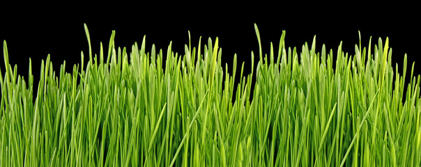 Close up of the green grass on black background