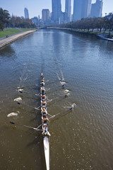 a team of rowing training in Melbourne Australia