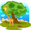 roleta: giraffe eating leaf