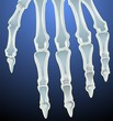 Illustration of human hand bones
