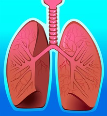 Illustration of human lungs in blue background