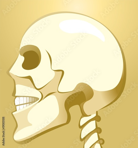 Illustration of skull in brown background