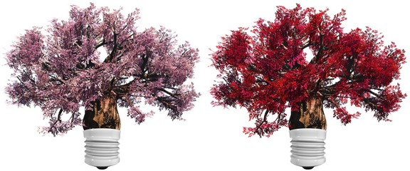 High resolution pink and red baobab trees set