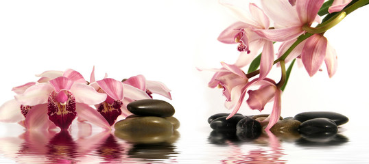 Orchid and pebbles with reflection in water,Zen atmosphere.