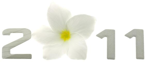 bonne année 2011 chiffres fleur blanche fond blanc