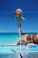 Dolphin jumping out of the water