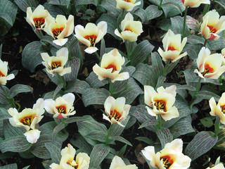 Flores Parque Nacional Holanda 16