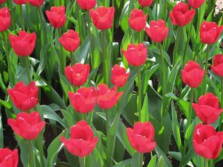 Flores Parque Nacional Holanda 27
