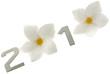 2010 année fleur frangipanier fond blanc