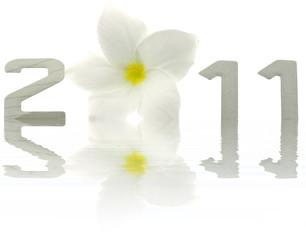 2011 année fleur frangipanier reflets fond blanc