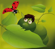 caterpillar and ladybird