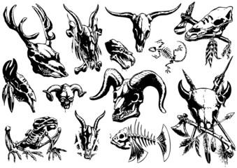 vector illustration tattoo design set (animal skull)