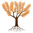 Arbre en Automne - Autumn Tree (Saisons - Dessin - Vecteur)