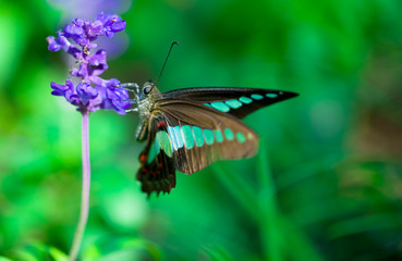 butterfly and purple flower