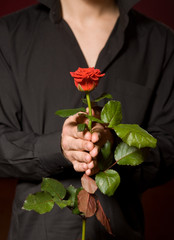 Close up of young man with rose in black shirt