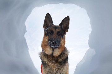Avalanche Rescue Dog A Most Welcome Sight