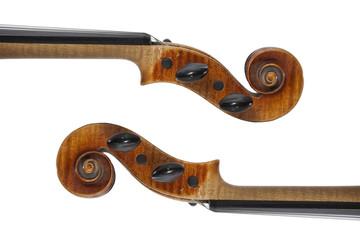 Riccio di Violino