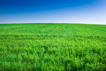 Green field of grass under blue sky