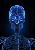 X- ray human brain, skull, spine and skeleton front view poster