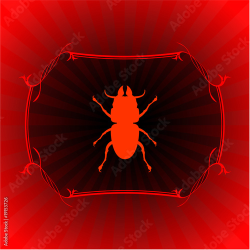 insect on red frame background