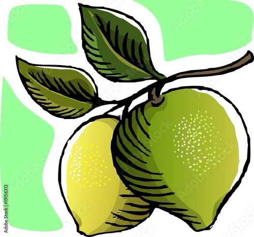 Illustration of guava  in the plant