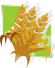 Illustration of a wheat in a green background