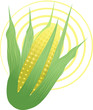 Indian corn in a yellow design background