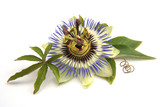 Passiflora - Fine Art prints