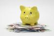Gelbes Sparschwein auf Geldscheinen