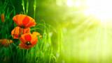 fleurs de coquelicots dans un champs - coquelicot - 19203936
