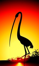 Illustration of crane in colour background