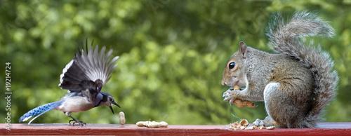 Plexiglas Eekhoorn Bird and Squirrel
