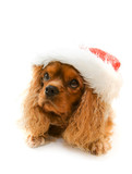 cute dog in Santa hat