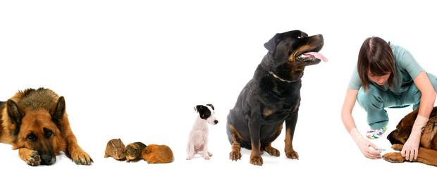 animaux qui patientent pour avoir le vaccin chez le vétérinaire