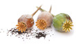 Poppy seeds on white