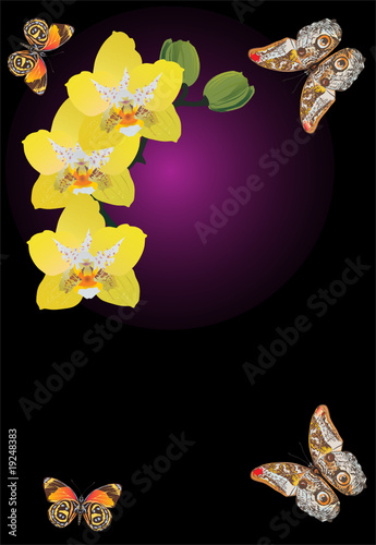 yellow orchid flowers and butterflies