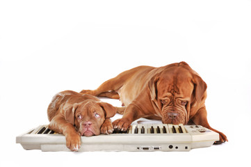 Dogs playing electrical piano