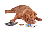 Dog in Debt poster