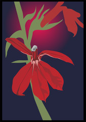 flowers of red orchid
