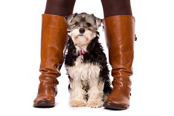 Dog between boots
