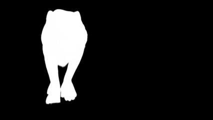 Steps of black panther