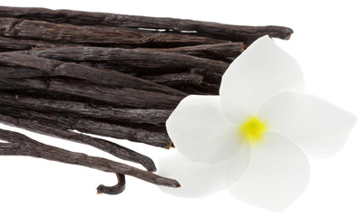 gousses vanille fleur frangipanier fond blanc