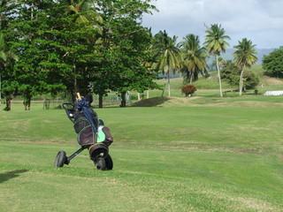 Martinique - Golf des 3 Ilets