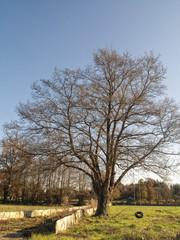 Columpio en un árbol