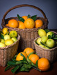 Harvest of citrus