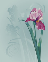 Background with lilac iris